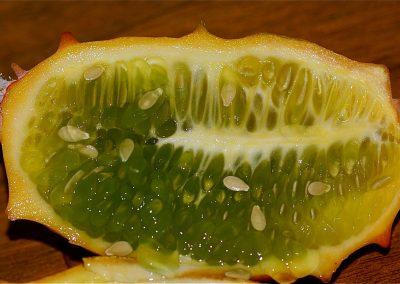 Cucumis_metuliferus_fruit_cross